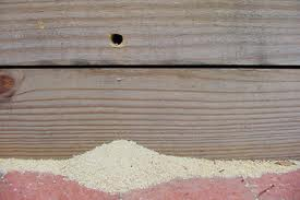 sawdust under carpenter bee hole