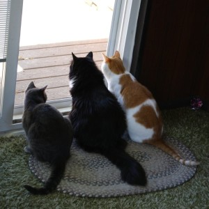 cats-looking-out-storm doors